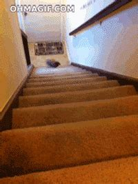 running  stairs gifs find share  giphy