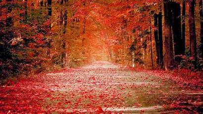 1080p Autumn Nature Wallpapers Desktop Fall Wallpapersafari