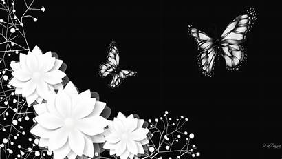 Wallpapers Background Cool Backgrounds Desktop 1080p Butterfly