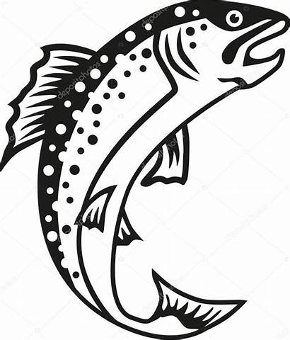 Forelle Fish Forel Truite Trout Fische Clipart