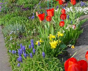 Tulpen Im Garten : tulpen narzissen garten know ~ A.2002-acura-tl-radio.info Haus und Dekorationen