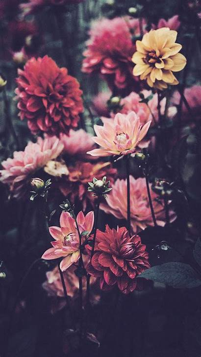 Iphone Xs Wallpapers Max Pretty Flower Floral
