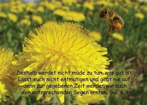Galater, Blumen, Biene, Ermutigung