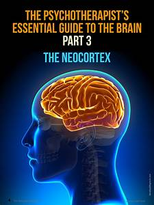 The Psychotherapist U0026 39 S Essential Guide To The Brain Part 3