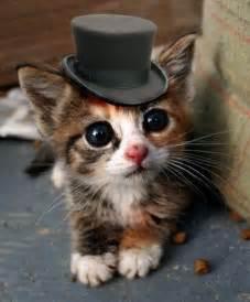 cats in hats best 20 kittens ideas on