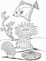 Coloring Underwater Pages Plants Ocean Drawing Undersea Worksheet Sea Adult Print Fungi Fish Adults Marine Coloringhome Printable Getdrawings Popular sketch template