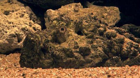 Best Disguised Predator Fish?