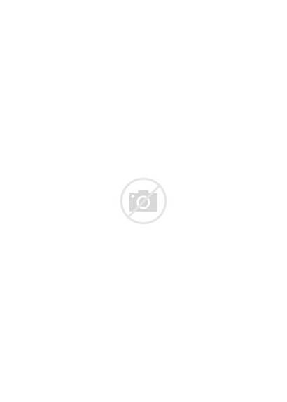Norwegian Cat Forest Cats Haired Breeds Breed