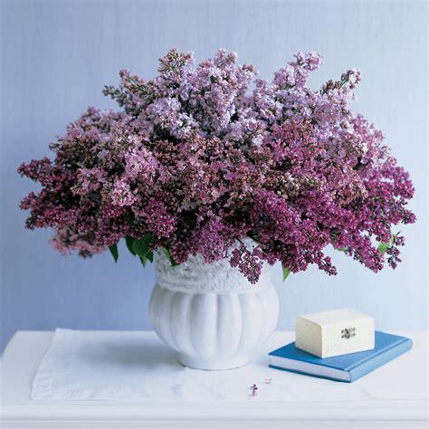 lilac arrangements martha stewart