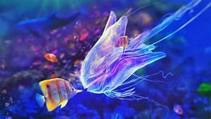 Fish migration - YouTube