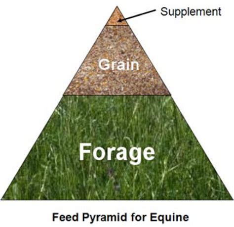 horse diet horses exactly kind right nutrition amazinganimals xyz