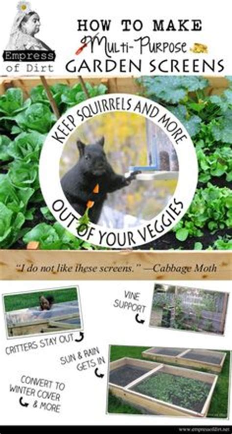 how to keep squirrels out of your garden 1000 images about at home both in and out on