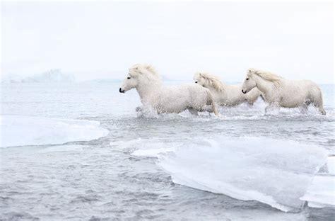 animals horse wild drewdoggett