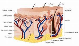How Do Skin Moisturizers Work   U2013 Chemists Corner