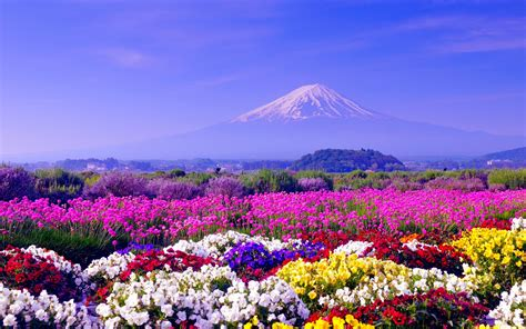 Spring Background Free Download Pixelstalknet