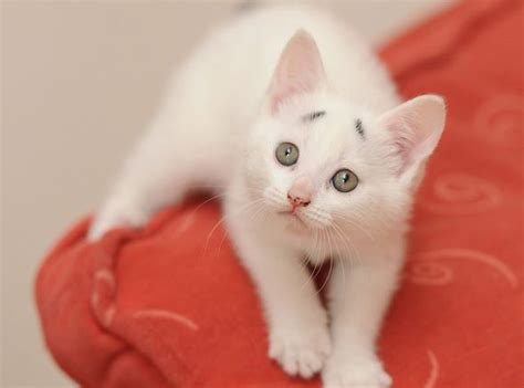 meet concerned kitten  grumpy cat rival
