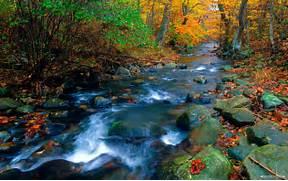Nature wallpaper - Nat...Beautiful Nature Scenery Wallpapers