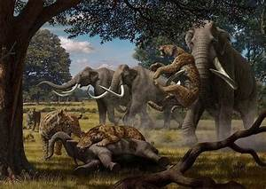 Extinction of woolly mammoth, saber-toothed cat may have ...