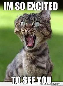 HOLY TIGREX I'm So excited - Excited cat Hi - quickmeme