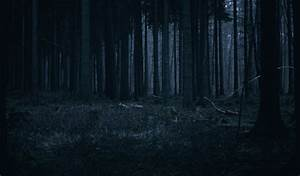 Night, Forest, Wallpapers, High, Quality