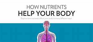 How Nutrients Help The Body  An Interactive Guide