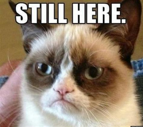 cat grumpy meme go still viral funny why study cats stories cheer apocalypse scientists internet incitrio tuesday job grumpycat wall