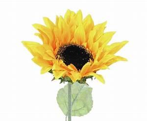 Geranien Gelbe Blätter : wundersch ne sonnenblume mit gelben bl ten hier bestellen ~ Orissabook.com Haus und Dekorationen