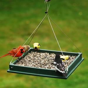 Songbird Essentials SERUBLHPF105 Hanging Platform Bird