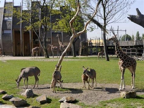 rotterdam blijdorp zoo tourist attraction rotterdam