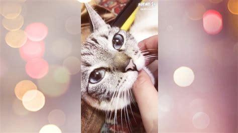 Tik Tok Hilarious Cute Cats June 2020 01 Youtube