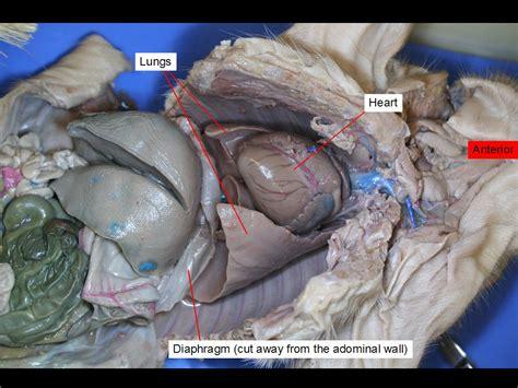Reading Fetal Pig Dissection  Biology Ii Laboratory Manual
