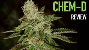 Strain Review  Chemdawg-d