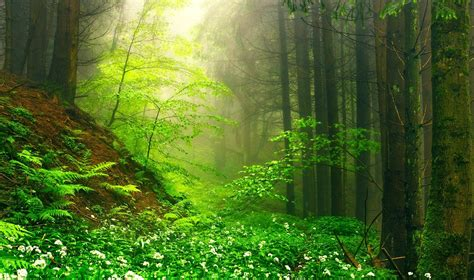 nature landscape green mist forest wildflowers moss