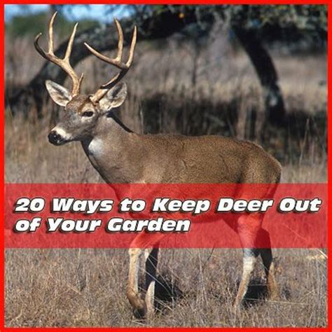 how to keep deer out of your garden 20 ways to keep deer out of your garden mike the