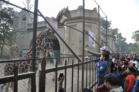 Zoological Garden Opinions On Alipore Zoological Gardens