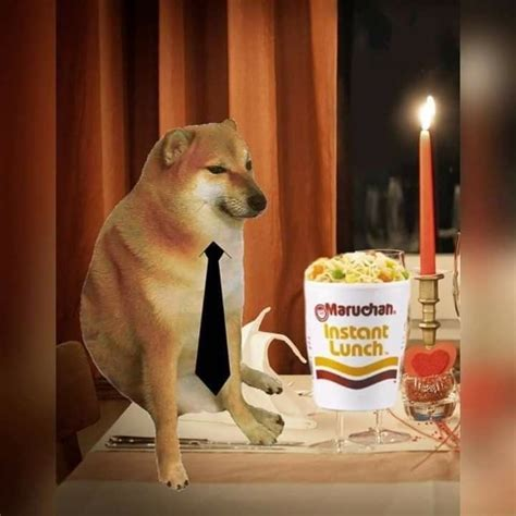 chemms izq   cute memes funny dog memes stupid