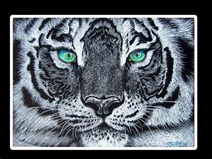 The White Tiger with Green Eyes by TitanicGladiator on ...