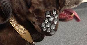 Pet dog has buttons sewn onto her ear - Belfast Live