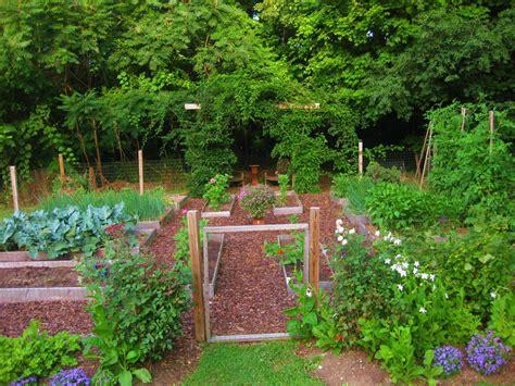 gardening pics your july veggie garden updates