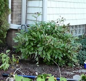 Ab Wann Erdbeeren Pflanzen : ab wann kann man stauden pflanzen b ume unterpflanzen mein sch ner garten pfingstrosen d ngen ~ Eleganceandgraceweddings.com Haus und Dekorationen