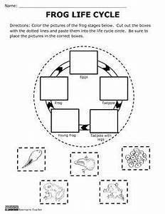 Frog Life Cycle Activity and Craft | Frog life cycles ...