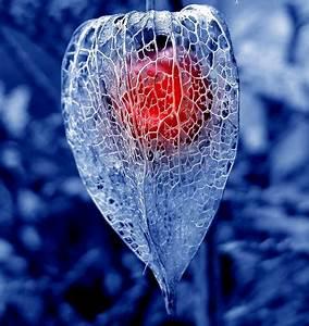 Winter Solstice – Full Moon – Death, Renewal, Rebirth ...