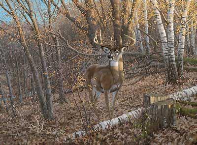 prints  deer images  whitetail bucks