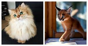 21 Of The Most Astoundingly Beautiful Cats In The World ...