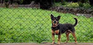 Kleiner Zaun Für Hunde : wie gew hne ich dem hund das ber den zaun springen ab ~ Sanjose-hotels-ca.com Haus und Dekorationen