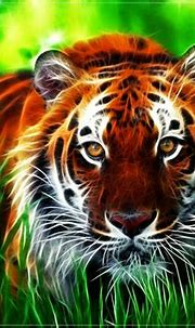 Lovable Images: Wild Tiger Hd WallPapers Free Download ...