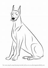 Doberman Draw Drawing Dogs Dog Drawings Step Drawingtutorials101 Tutorials Learn Colouring Animals Pincher Animal sketch template
