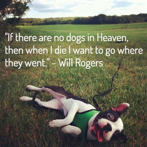 dog loss quotes comforting words  losing  friend