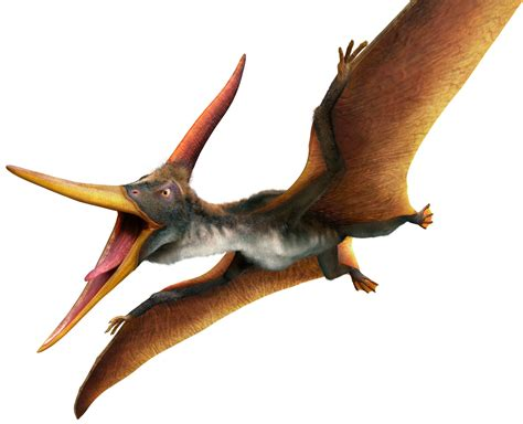 Pteranodon Pteranodon Facts Dk Find Out