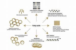 Essential Fatty Acid Omega 3 Explained